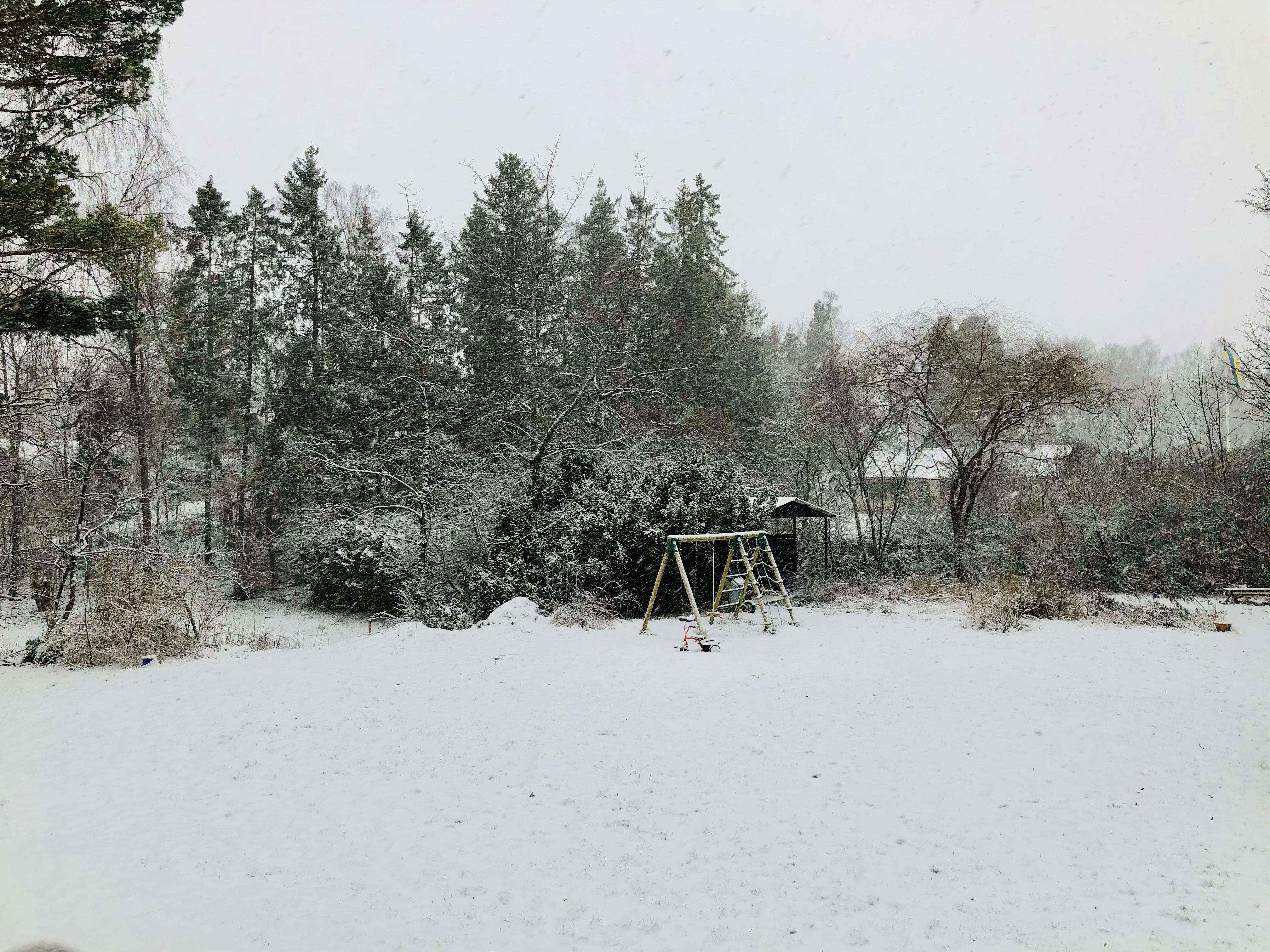 Snötäckt trädgård